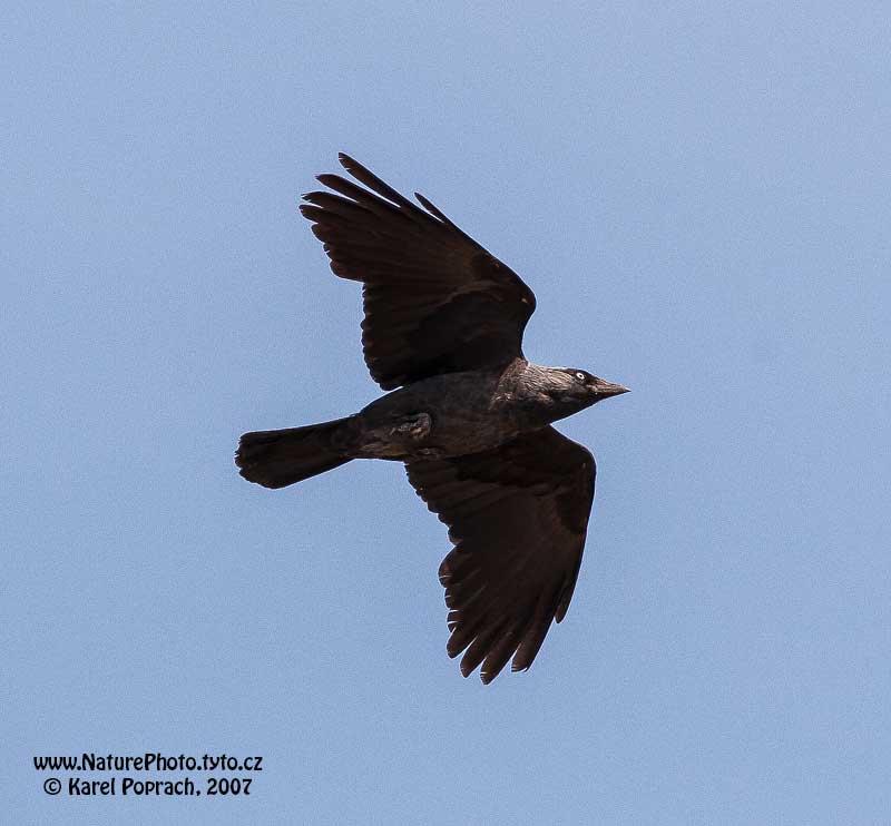 http://naturephoto.tyto.cz/photos/000000001866.jpg